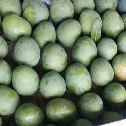 পাইকারি আম্রপালি আম