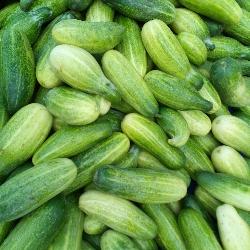 পাইকারি শসা