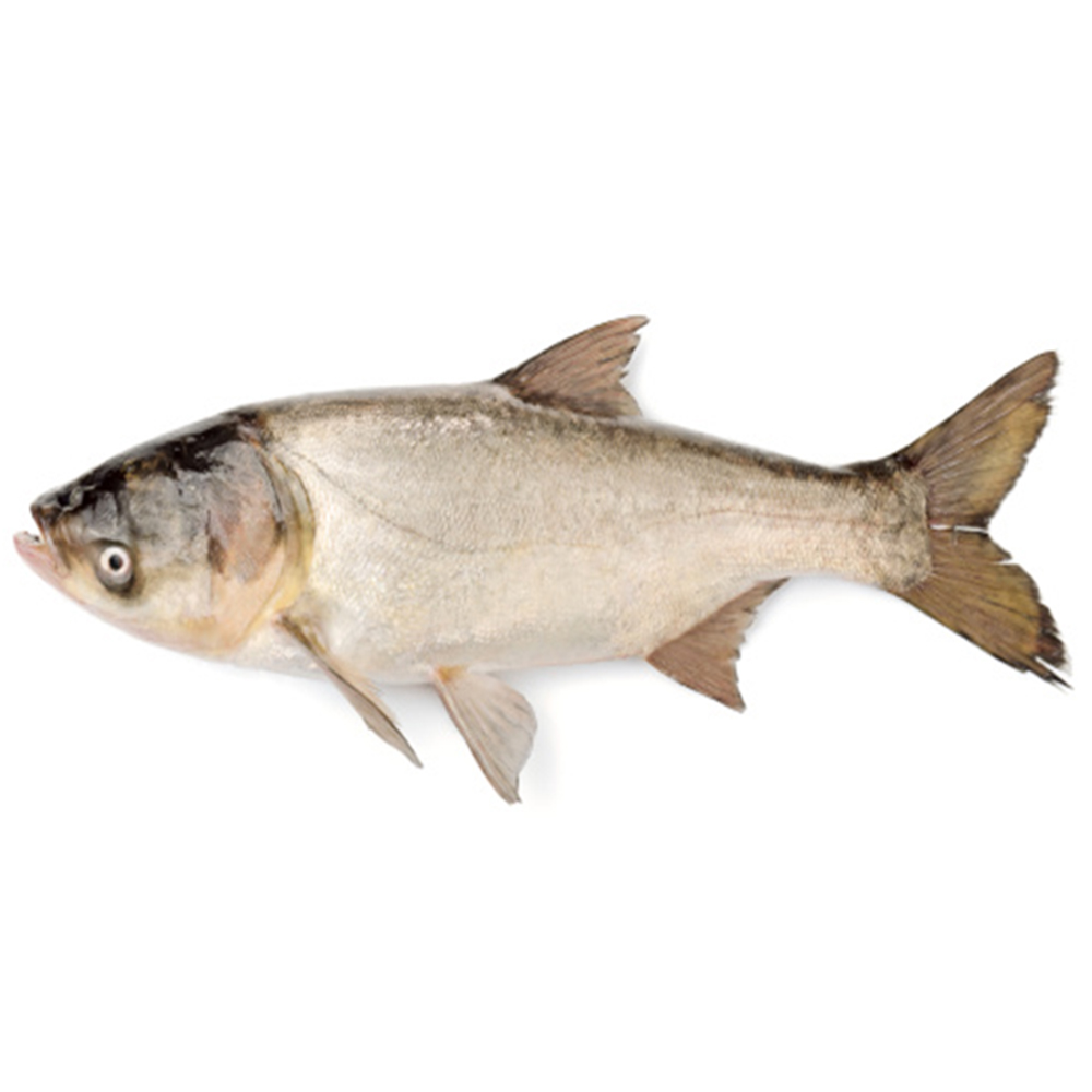 পাইকারি  ব্রিগেড মাছ