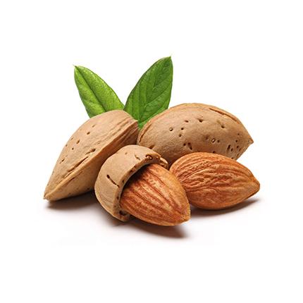 Salted Almond Nut (Kath Badam) - 500gm (Home Made)কাঠ বাদামের দাম